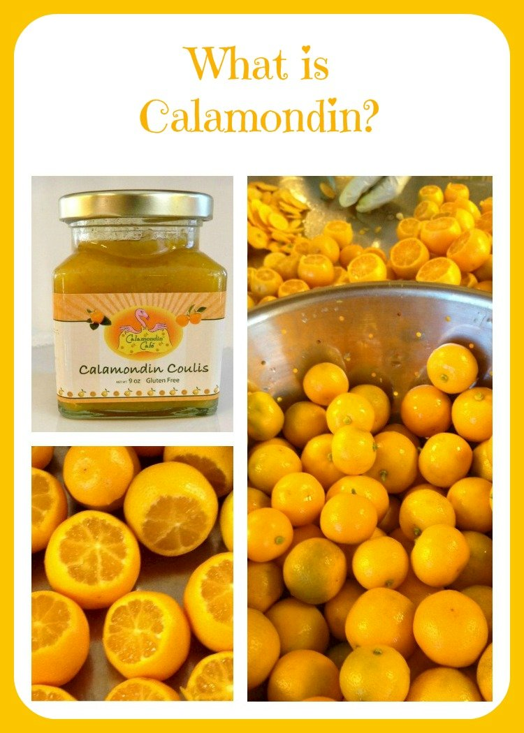 What is Calamondin?